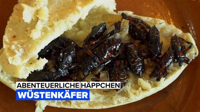 Abenteuerliche Häppchen: Xamues Wüstenkäfer